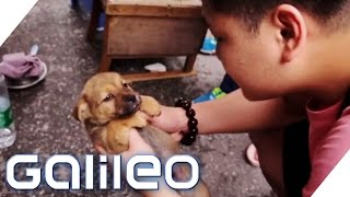 Vorurteilscheck China - Was ist dran an den Klischees | Galileo | ProSieben