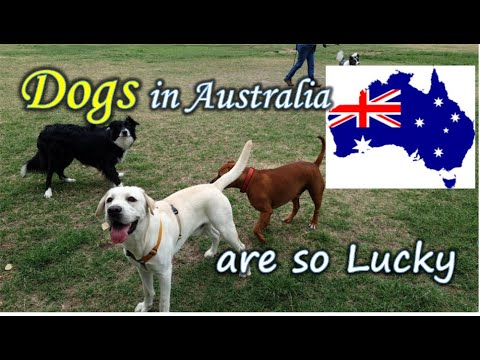 Dog Park in Brisbane Australia