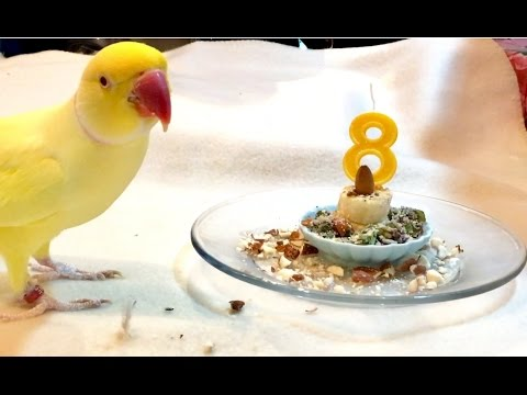 Bowies Mini Banana Birthday Cake lol YouTube