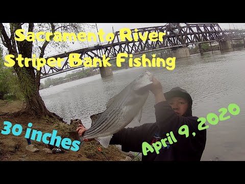 Sacramento River Striper Bank Fishing (04/09/2020)