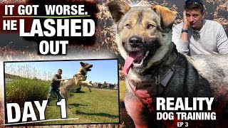 DAY 1: I Took This UNTRAINED DOG Out for the FIRST TIME & HE LASHED OUT. Reality Dog Training