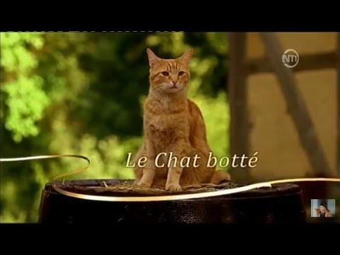 Les contes de Grimm Le Chat Botté