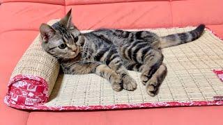 ござの布団をプレゼントしたら気持ち良すぎてダメになってしまった子猫w