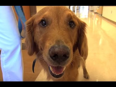 Therapy Dogs Lend Helping Paw to Patients