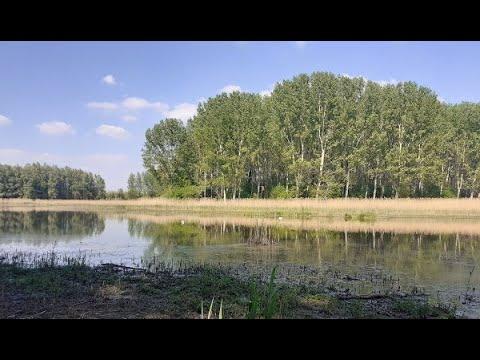 Zapisi iz Belišća - Prirodna-povijesna baština slavonske Podravine