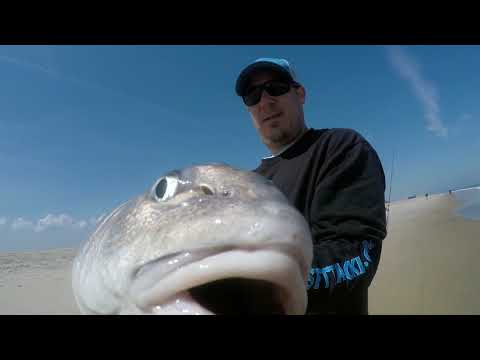 Assateague Island Fishing Spring 2019