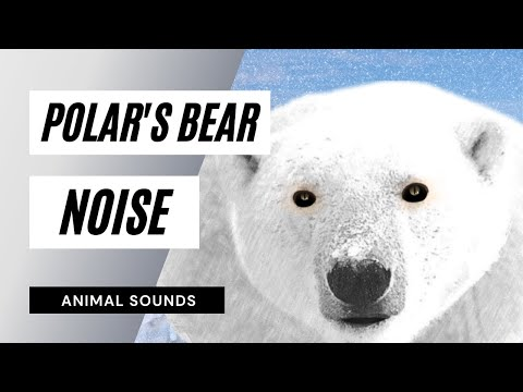 The Animal Sounds: Angry Polar Bear - Sound Effect - Animation