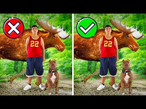Как действовать, если вы встретили лося