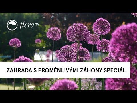 Download Zahrada s proměnlivými záhony Speciál Když kvetou česneky    Inspirativní zahrada   Flera TV
