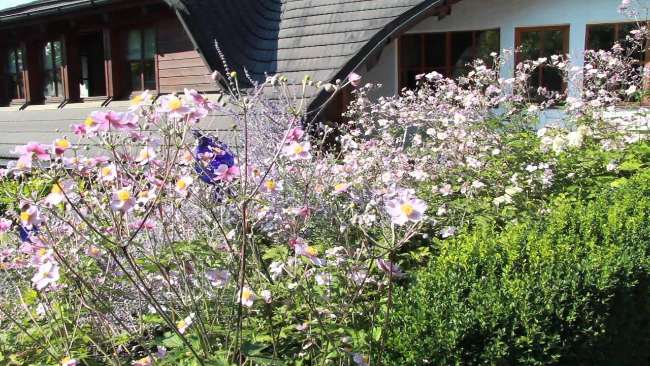 Vol At Gartentipp Die Japanische Herbst Anemone Youtube