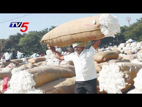 Cotton Farmers Facing Problems Due To Low Prices | Annapurna | TV5 News