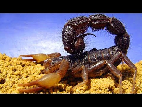 Top 10 Most Poisonous Insects In The World