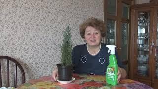 "КИПАРИС""ЭЛВУДИ""---МОЙ УХОД"