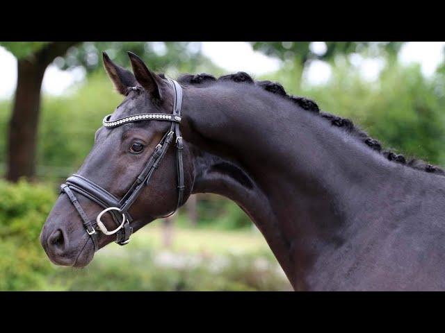 Deux nouveaux chevaux pour Alexandre et Grete Ayache