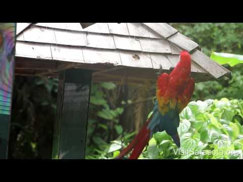 Visit Sarasota County: Sarasota Jungle Gardens
