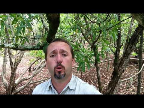 Operation Green Parrot – Norfolk Island National Park manager Craig Doolan
