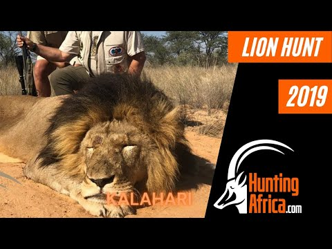 Lion Hunting in Africa | African Hunting Safari | Hunt Africa