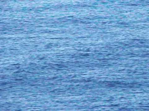 Dolphins in Cebu Seas