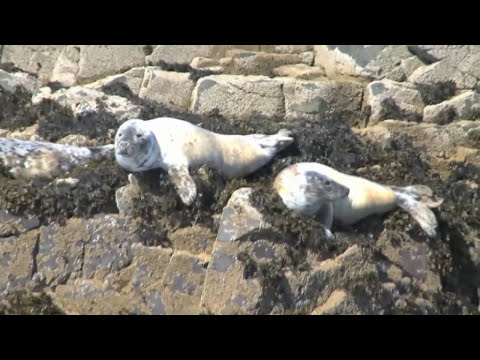 31/32 - Close-up on Britain's brilliant sea life