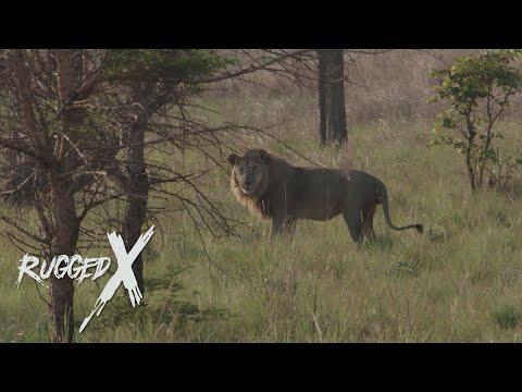 The Moyowosi King – Lion Hunt with J Alain Smith