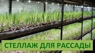 Стеллаж с подсветкой для рассады(Группа в ВК: http://vk.com/officialgrupvyacheslavavitra., 2014-06-08T11:37:31.000Z)