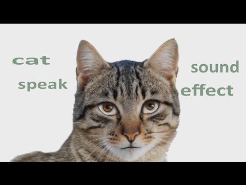 The Animal Sounds: Cat Speak - Sound Effect - Animation ...