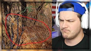 12 Impossible To Spot Photos - Reactions