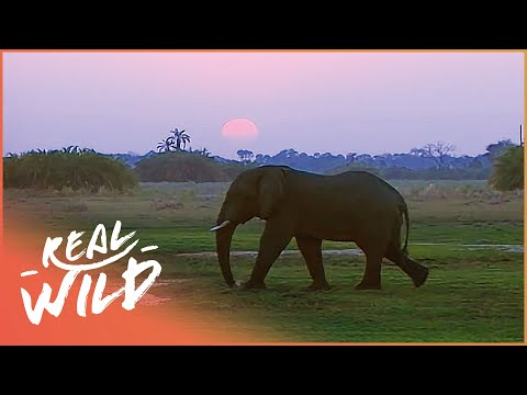 Chief Islands | Botswana's Wild Kingdoms | Real Wild Documentary