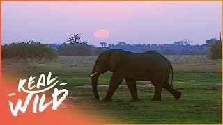 Chief Islands | Botswana's Wild Kingdoms | Wild Things Documentary