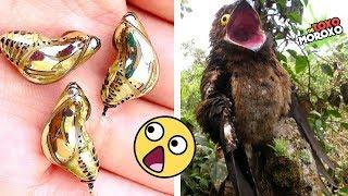 7 ANIMALES EXTRAÑOS Que NO SABÍAS Que Existían | DeToxoMoroxo