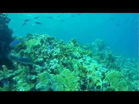 Diving the Red Sea - Sharm el Sheikh - Summer 2012