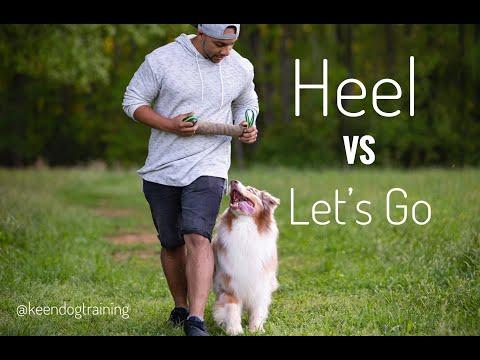 Dog Training: Heel vs Lets Go