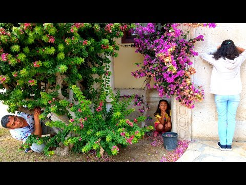 Esma and Asya garden hide and seek for kids video