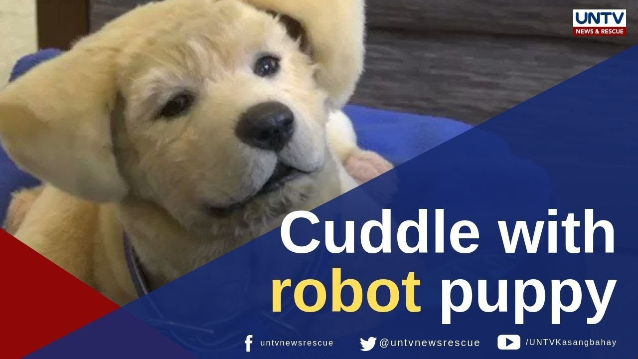 Meet the robotic puppy that provides comfort to Alzheimer's