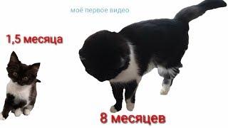 Самая красивая кошка в мире @ самая смешная , самая милая...