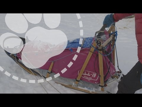 Mushing Explained: Designing The Perfect Dog Sled