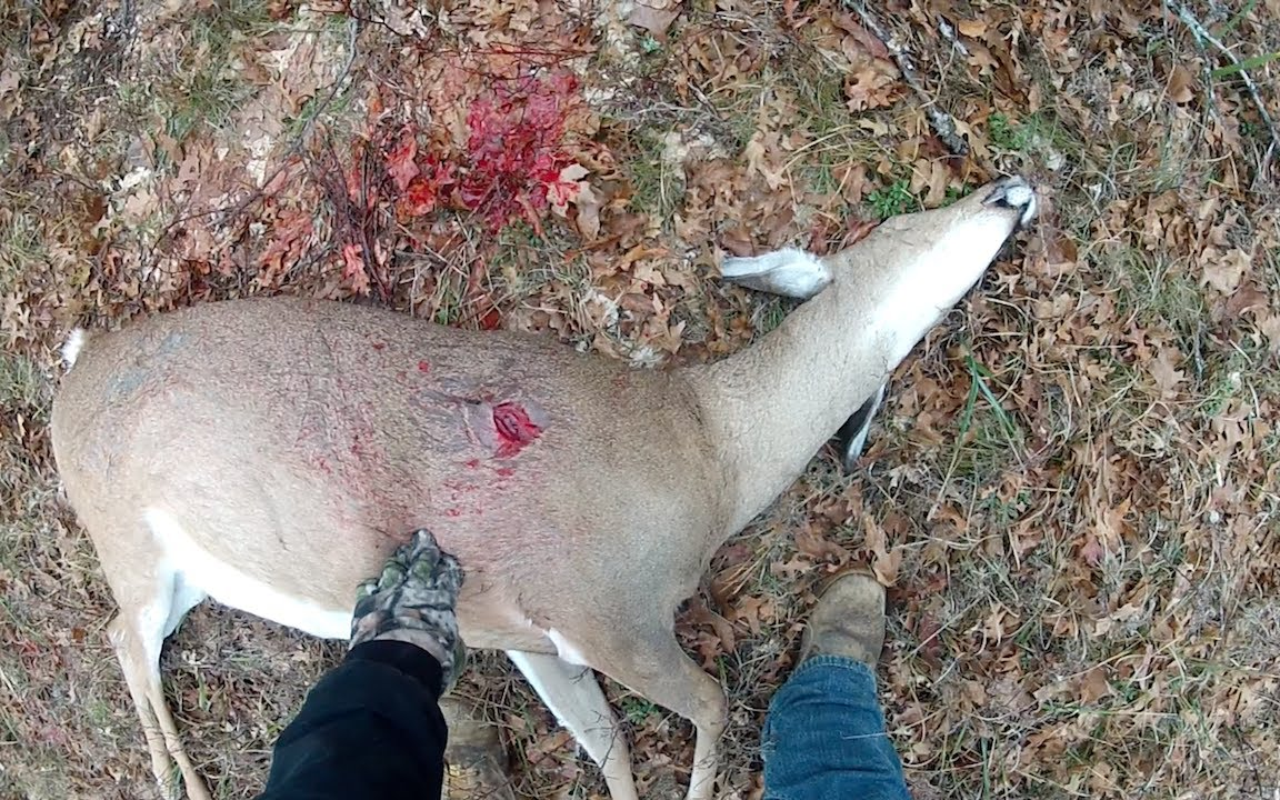 Big Deer Shot With Crossbow Rage Broadhead