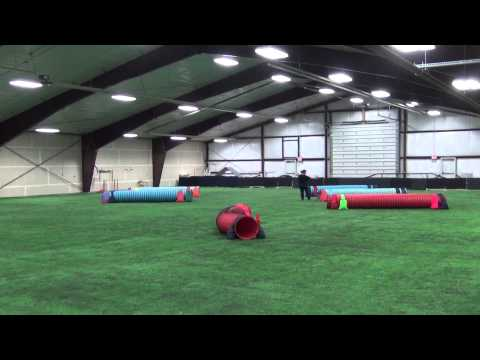 Ally Tunnelers - Yellowstone Dog Sports