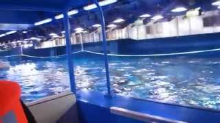 Glass-Bottom Boat ride (Dubai Aquarium)(Dubai Aquarium & Underwater Zoo Adventure., 2014-05-25T12:38:38.000Z)