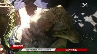 В Марганце шесть спасателей доставали собаку из колодца