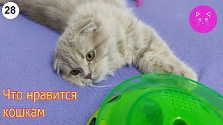 Что нравится кошкам #Кошки #Коты #Котята #Прикольные #Веселые #Красивые #Играют