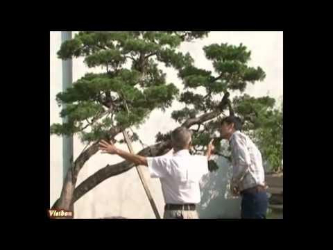 Tạo hình nghệ thuật cho cây cảnh- P2/6* alomua.vn, huongsacdatviet.com, tacphamvietnam