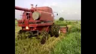 Harvesting Rice at Dawhenya Irrigation Project - Ghana