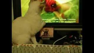 Тайский котенок и гусеница на экране! Смотрите все! Тайские кошки - это чудо! Funny Cats