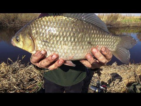 Такой рыбалки у меня еще не было. Огромные караси на поплавочку.