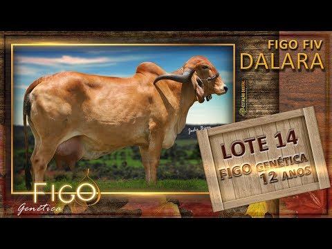 LOTE 14 - FIGO FIV DALARA - HCFG 586