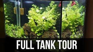 Planted 20 Gallon High Betta Tank | 1 Month Update!!