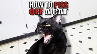 talking kitty cat 50 how to piss off a cat