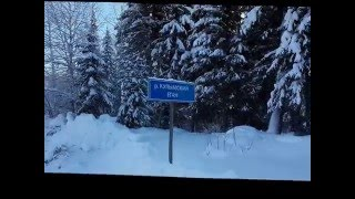 Поход, прогулка по зимнему лесу, волчьи следы. 08 01 2016г