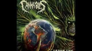 Cannabies Sativa Syn